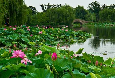 莲池湖公园