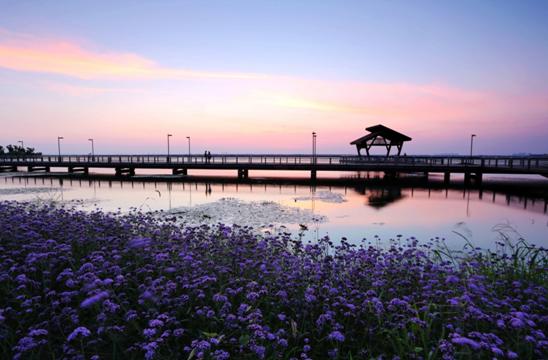 """环岛骑行 感受阳澄湖半岛的""""大好时光"""""""