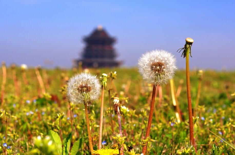 阳澄湖半岛重元寺禅修 心装一个清凉的夏天